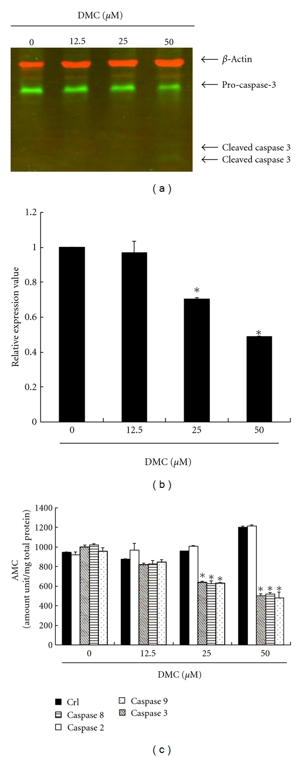 Apoptosis induction by DMC in GBM 8401 cells via <t>caspase</t> 3, 8, and 9 activations. DMC activated pro-caspase-3 degradation in GBM 8401 cells. The cells were treated with DMC (0, 12.5, 25, and 50 μ M), and then (a) Western blot analysis was performed for pro- and cleaved- caspase-3. (b) Quantification of band intensities by Li-COR near-infrared imaging system. All data were reported as the means (±SEM) of at least three separate experiments. Statistical analysis used the t -test, with the significant differences determined at the level of * P