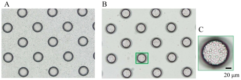 Dispersion of leukocytes isolated from whole blood on a cell microarray chip and confinement in the microchambers. (A, B) Photographic light microscopic images of leukocytes on a cell microarray chip before (A) and after (B) washing of the chip surface. (C) The leukocytes showed tight confinement and had formed a monolayer in the microchamber. (Bar: 20 µm).