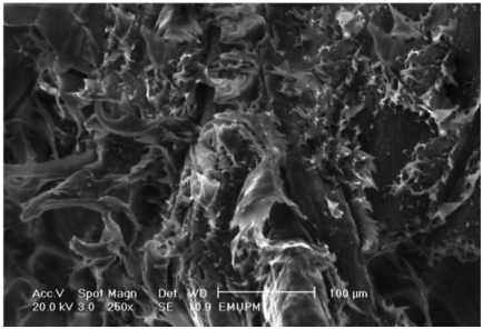 Tensile fracture surface micrographs of low WPG esterified <t>EFB</t> fiber reinforced PBAT <t>biocomposite</t> in presence of 1 wt% of DCP initiator.