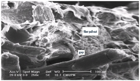 The tensile fracture surface micrograph of PBAT biocomposite reinforced with 40 wt% of EFB.
