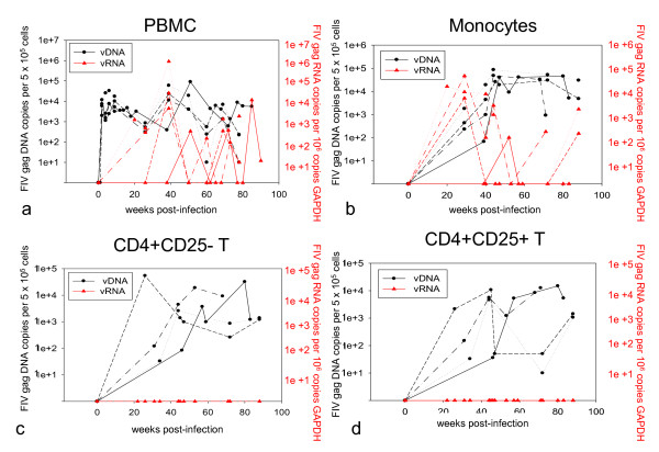 CD4+ T cells persistently infected in the absence of detectable plasma viral RNA . PBMCs (a), monocytes (b), CD4+CD25- T cells (c), and CD4+CD25+ T cells (d) isolated from blood from all FIV-infected cats were examined over time PI for viral DNA and vRNA by real-time PCR assays as described in Methods. Data from individual FIV-infected cats are plotted as solid black lines (165), medium-dashed lines (187), short-dashed lines (186) and dotted lines (184).