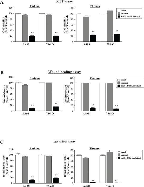 Effect of mature miR-1285 transfection in RCC cell lines (A) Cell proliferation was determined with XTT assays of A498 and 768-O cell lines after 72 h transfection with 10 nM miR-1285 , miR-control and mock. Cell proliferation was significantly inhibited in miR-1285 transfectants in comparison with the mock cells. Thus, with the Ambion products, the percentage of cell viability relative to mock cells was 20.3 ± 1.7% for A498, and 20.1 ± 0.7% for 786-O (both P