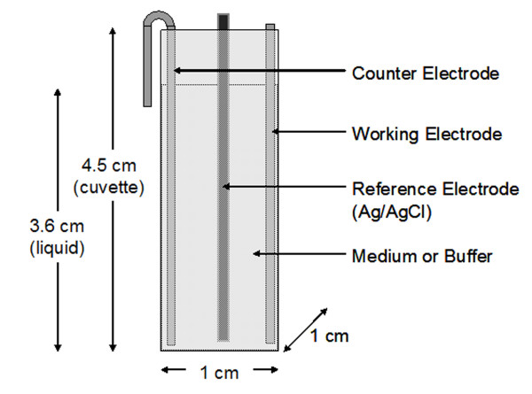 Schematic of the electrochemical cell used in this study . The reference electrode is Ag/AgCl wire inserted in a thin glass tube to prevent contact with the working or counter electrode. Biofilms grown on flat steel or carbon electrodes can be clipped onto the side; the liquid level is about 1 cm below the top of the cuvette when full (3 mL).
