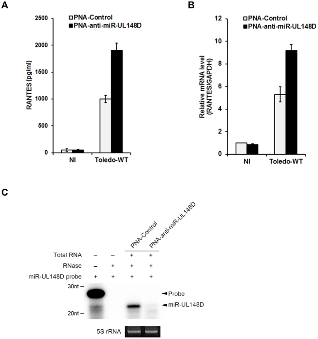PNA-based antisense oligonucleotides specific to miR-UL148D revert Toledo-induced inhibition of RANTES production. 2 days before HCMV infection, PNA-control or PNA-anti-miR-UL148D was transfected to HFF. After 48 h of infection, culture media and total RNA were analyzed by ELISA (A) and qRT-PCR (B). Down-regulation of miR-UL148D in the presence of PNA was detected by RNase protection assay (C). NI indicates non-infected control. Similar data were obtained in three independent experiments and the bars indicate mean ±S.D.
