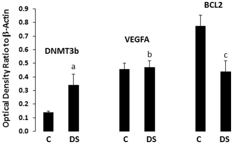 Protein levels of DNMT3b, <t>BCL2,</t> and VEGFA in PFC of depressed suicide (n = 18) and normal control (n = 17) subjects. Protein samples from tissue lysates were subjected to 10% polyacrylamide gel electrophoresis and transferred to enhanced chemiluminescence–nitrocellulose membranes, which were then incubated with primary antibody specific for DNMT3b, BCL2, VEGFA or β-actin and corresponding secondary antibody. The suicide group was compared with the control group. DMNT3b was strongly up-regulated (2.4-fold) in the depressed suicide group ( a p = 1×10 −11 ), VEGFA showed no significant change (1.03-fold, b p = 0.4) and BCL2 was strongly down-regulated (0.57 of control, c p = 2.4×10 −14 ). C = Controls; DS = Depressed suicide.