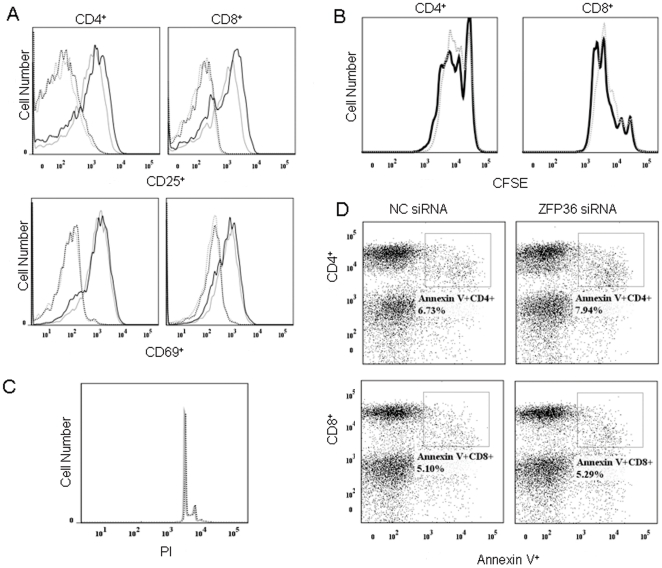 Effect of siRNA-mediated silencing of ZFP36 on T cell activation, proliferation, and survival. PBMCs from healthy donors were transfected by nucleofection with non-specific siRNA (NC siRNA) or ZFP36-specific siRNA (ZFP36 siRNA). A. Expression of CD25 and CD69 in CD4 + and CD8 + T cells was measured 24 h after stimulation with anti-CD3/CD28. Dotted lines: un-stimulated cells; solid lines: stimulated cells; grey lines: NC siRNA-transfected cells; black lines: ZFP36 siRNA-transfected cells. B. CFSE dilution of labeled CD4 + and CD8 + T lymphocytes. Dotted lines: cells transfected with NC siRNA; solid lines: cells transfected with ZFP36 siRNA. C. Cell cycle status of ZFP36 siRNA-transfected T cells. Cells were stained with PI. Solid lines: cells transfected with NC siRNA; dotted lines: cells transfected with ZFP36 siRNA. D. Apoptotic rates of ZFP36 siRNA-transfected T cells as determined by Annexin V staining. Percentages represent the frequency of Annexin V + cells within the CD4 + and CD8 + T cell populations of PBMCs transfected with NC siRNA or ZFP36 siRNA.