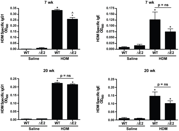 Allergic sensitization in HDM exposed mice. Levels of HDM specific IgG1 and IgE were increased in both WT and Bmpr2 ΔE2 mice after 7 weeks (top panels) and 20 weeks (bottom panels) of HDM exposure. At 7 weeks, HDM specific IgG1 levels in WT mice were slightly higher compared to Bmpr2 ΔE2 mice (n = 4–12 mice/group). *P