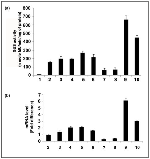 """Transgenic analysis of promoter constructs. ( a ) Comparative stable expression analysis of parent and hybrid promoter-GUS constructs in transgenic tobacco plants. Promoter activities of parent and hybrid promoters were monitored in 21-days-old tobacco ( Nicotiana tabacum cv. Samsun NN) seedlings (R1 progeny, 2nd generation, Kan R ) grown aseptically on an MS-agar medium in presence of kanamycin (300 µg/ml) and 3% sucrose. Soluble protein extracts (5 µg) from whole seedlings were used for the GUS assay. The data presented in the histogram as an average of three independent experiments for each construct with respective standard deviation (SD). The statistical analysis revealed a P value of 0.001 implying highly significant. In the histogram, GUS constructs: (1) Untransformed control tissue extract from the wild type Nicotiana tabacum cv Samsun NN (2) pKYLXGUS, with CaMV35S promoter, (3) pKFScpGUS, with FScp promoter; (4) pKFSGUS, with FS promoter; (5) pKFGUS, with F promoter; (6) pKFcpGUS, with Fcp promoter; (7) pKFSuasGUS, with FSuas promoter; (8) pKFuasGUS, with Fuas promoter; (9) pKFuasFScpGUS, with FuasFScp promoter; (10) pKFSuasFcpGUS, with FSuasFcp promoter; were shown. ( b ) Comparative expression analysis of transgenic plants expressing GUS constructs of parent and hybrid promoters by qRT-PCR assay. For each construct, 21-days-old seedlings (R1 progeny, 2nd generation, Kan R ) from independent transgenic lines were selected. Estimation of relative GUS transcript accumulation in transgenic plants developed using GUS constructs driven by CaMV35S, FScp, FS, F, Fcp, FSuas, Fuas, FuasFScp and FSuasFcp promoters was performed by qRT-RCR as described in """" Materials and Methods """". The data presented in the histogram were average fold difference of GUS transcript ± SD of two independent experiments carried out using cDNA derived from two RNA samples extracted from two different plants expressing individual promoter constructs. In the histogram, each bar represents nu"""