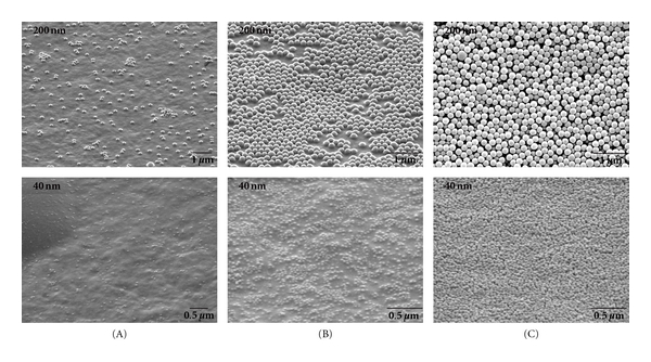 ESEM images of a microelectrode in each region (A), (B), and (C) after enzyme-NP assembly. Top row: microelectrodes after assembling 31 total alternating layers of 200 nm biotin NPs and <t>streptavidin-AP.</t> Bottom row: microelectrodes after assembling 21 layers of 40 nm biotin NPs and streptavidin-AP.