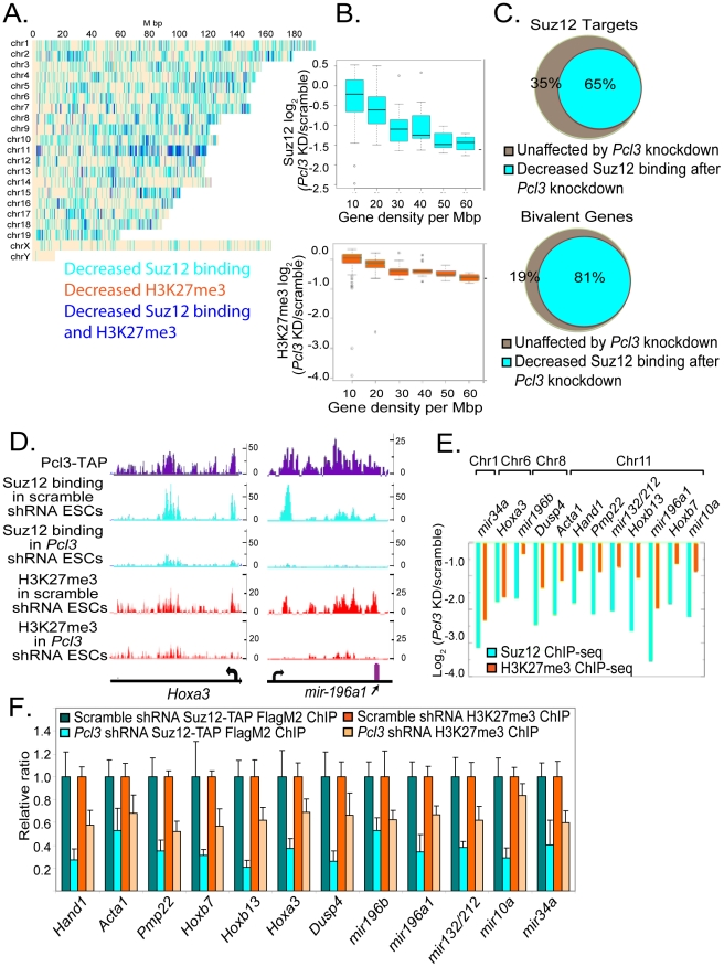 Pcl3 affects Suz12 binding at a subset of PRC2 targets. (A) Graph depicts chromosome-wise distributions of decreased Suz12 and H3K27me3 ChIP-seq reads upon Pcl3 knockdown ( Pcl3 KD) relative to scramble control. Many regions display both Suz12 and H3K27me3 depletion (blue). Independently decreased Suz12 occupancy and H3K27me3 are marked in cyan and orange, respectively. ChIP-seq peaks were called at a Skellam distribution p-value cutoff of 10 −7 . Fisher test p-value was 3.2×10 −41 for the overlap of H3K27me3 with Suz12 sites. (B) Reduced Suz12 and H3K27me3 ChIP-seq read density upon Pcl3 knockdown is correlated with gene density. Pearson correlation is 0.40 for Suz12 and 0.26 for H3K27me3. (C) 65% of PRC2 targets show decreased Suz12 binding upon Pcl3 knockdown, particularly bivalent genes (Fisher test p = 4.9×10 −250 ). (D) Binding of Pcl3 and Suz12, and histone mark profiles of H3K27me3 at the Hoxa3 gene and in the region surrounding mir-196a1 . Units are number of reads/250 bp. (E) Log fold-changes in Suz12 and H3K27me3 ChIP-seq read density at specific genes in Pcl 3 knockdown cells compared to scramble control. (F) Levels of Suz12 binding and H3K27me3 in Suz12 Suz12TAP/+ cells expressing either scramble or Pcl3 shRNA assessed by FlagM2 or H3K27me3 ChIP-qRT-PCR. ChIP-qRT-PCR experiments were performed at 3–4 times and assayed in quadruplicate. Error bars indicate standard deviation. Decreases are statistically significant, p