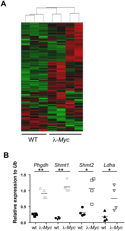 Myc regulates the metabolic transcriptome. (A) Unsupervised hierarchical clustering of <t>Illumina</t> bead arrays made from <t>RNA</t> of splenic B cells from three wildtype and four precancerous λ- Myc transgenic mice. See Table S1 for genes used in the clustering. (B) qRT-PCR confirmation of 4 of the 20 most significantly, or most elevated expressed genes, in B220-sorted B cells from λ- Myc transgenic mice. *indicates p