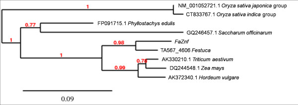 Phylogenetic tree of FaZnF and related genes . The top BLAST hits from each genera obtained when FaZnF was used for BLAST analysis at NCBI [ 49 ]. Also included is