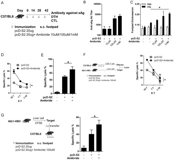Amiloride enhances adaptive immunity against HBV S2. Naïve C57 mice were immunized s.c. with pcD-S2 at various concentrations with or without amiloride in the hind footpad four times using the immunization scheme as shown (A). Seven days after the last immunization, animals (n = 3) were used to test anti-S2 IgG antibody titer (B) and delayed hypersensitivity (DTH) response after re-stimulation with 1 µg sAg s.c. in a hind footpad for 24 h (C). PBS was added as negative control. *, statistical significance among all groups. Another 3 animals were used to test HBV S208–215 specific lysis in vitro (D) and in vivo (E). Hepatocytes from HBV Alb1 trangenic mice were used as targets mixed with effectors from the immunized mice, or transferred into the immunized mice before the analysis of specific lysis in vitro (F) and in vivo (G). *, statistical significance between +/− amiloride.