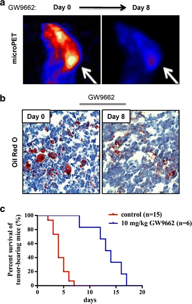 Treatment of medulloblastoma-bearing mice with PPARγ antagonist GW9662 prolongs survival and reduces glucose uptake in vivo. a FDG-PET scan of medulloblastoma-bearing <t>NeuroD2</t> - <t>SmoA1</t> mouse before and after treatment with the PPARγ antagonist GW9662 (10 mg/kg, intraperitoneal injection daily over the 8-study day period). b A representative Oil red O staining of medulloblastoma sections from an untreated mouse ( day 0 ) and a counterpart treated with GW9662 for 8 days. c Kaplan–Meyer survival curve of NeuroD2 -SmoA1 medulloblastoma-bearing mice in days commencing with initiation of treatment with DMSO or GW9662.; * P value
