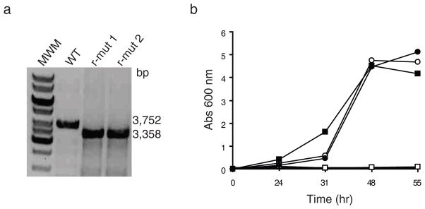 mmpL3 is an essential gene of M. smegmatis ( a ) Evidence for allelic replacement at the mmpL3 locus of M. smegmatis mc 2 155 in the presence of a rescue copy of mmpL3tb expressed from an episomal plasmid. Allelic exchange mutants were rescued with the mmpL3tb gene from M. tb expressed from either pMVGH1- mmpL3tb , pMVGH1- mmpL3tb-G253E or pSETetR- mmpL3tb . Allelic replacement was confirmed by PCR as described under the Methods section. The wild-type (WT) 3,752-bp amplification signal is replaced by a 3,358-bp fragment in the rescued mutants (r-mut) due to the 1,594-bp NotI deletion in the mmpL3 gene and insertion of a 1.2 kb-kanamycin resistance cassette. Only the profiles of two mc 2 155 ΔmmpL3 /pMVGH1- mmpL3tb strains are shown here as identical profiles were obtained will all rescued mutant forms. See Supplementary Figure 9 for the image of the full uncut gel. ( b ) Growth characteristics of wild-type mc 2 155 (circles) and the conditional mutant, mc 2 155 ΔmmpL3 /pSETetR- mmpL3tb (squares), in 7H9-OADC-Tween 80 broth containing either no inducer (open symbols) or 50 ng ml −1 of anhydro-tetracycline (ATc) (full symbols) at 37°C. Reducing ATc concentration in the medium leads to the repression of mmpL3tb in the conditional mutant.