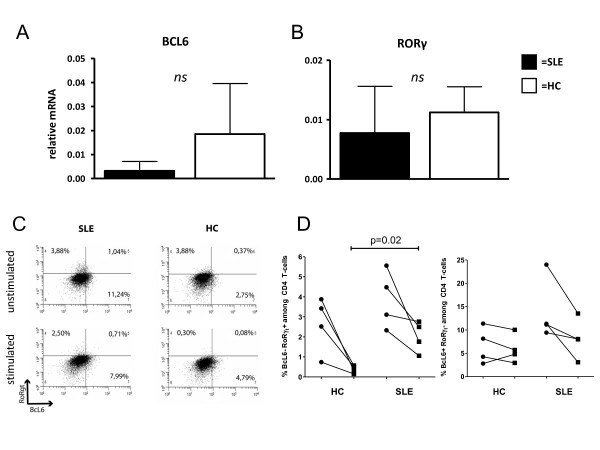 Relative expression of transcription factors BCL6 and ROR-y . The relative mRNA expression of BCL6 and ROR-y in unstimulated, sorted CD4 + T-cells was determined in SLE patients (SLE, n = 7) and healthy controls (HC, n = 4) ( A/B ). There was no significant difference in the relative expression between these two groups. Bars represent the mean values ± SD. In ( C ) a representative dot plot of unstimulated and stimulated PBMCs from a SLE patient a healthy control is shown. The percentages of BCL6 and ROR- γt + CD4 + T-cells in unstimulated (dots) and stimulated samples (squares) are given ( D ).
