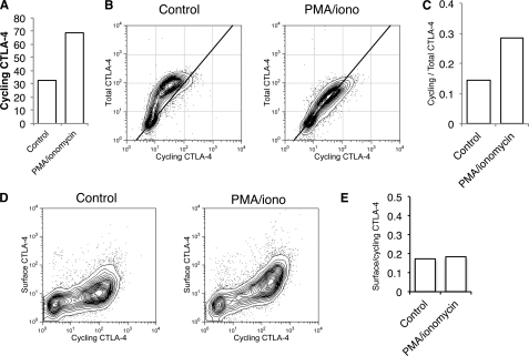Stimulation increases trafficking of CTLA-4 in the absence of increased synthesis. A , CTLA-4-expressing Jurkat cells were labeled at 37 °C with anti-CTLA-4 PE for 1 h after stimulation with PMA/ionomycin and analyzed by flow cytometry. B , Jurkat cells were labeled at 37 °C with anti-CTLA-4 PE in the presence or absence of PMA/ionomycin for 60 min ( cycling CTLA-4 ). Cells were then fixed, and total CTLA-4 was stained with a goat anti-CTLA-4 C-terminal antibody followed by Alexa633 anti-goat secondary and analyzed by flow cytometry. C , shown is the ratio of labeled to total CTLA-4 for cells, stained as in B. D , Jurkat cells were labeled at 37 °C with anti-CTLA-4 PE in the presence or absence of PMA/ionomycin for 60 min (cycling CTLA-4). Cells were then placed on ice, and the remaining surface receptors were labeled by incubation with Alexa647-conjugated anti-mouse secondary antibody (surface CTLA-4). Cells were analyzed by flow cytometry. E , shown is the ratio of surface to cycling CTLA-4 fluorescence for cells labeled in D .