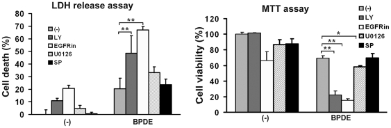 Blocking EGFR, Akt and ERK activation potentiates BPDE-induced cytotoxicity. BEAS-2B cells were pretreated with the indicated inhibitors (LY (10 µM) for Akt, EGFRin (6 µM) for EGFR, U0126 (5 µM) for ERK, and SP (10 µM) for JNK) for 30 min followed by exposure to BPDE (0.2 µM) for 48 hr. Cell viability was detected by LDH release and MTT assays. Data shown are mean ± S.D; ** P