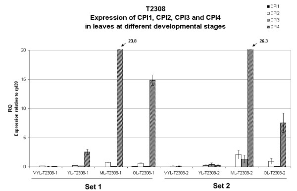 Quantitative expression analysis of CcCPI1, CcCPI2, CcCPI3 and CcCPI4 in leaves at different maturation stages for Arabica T2308 . The expression of each gene was measured in two independent sets of leaf samples during development and senescence. The expression levels were obtained using QRT-PCR. RQ is the expression level of each gene relative to the constitutively expressed gene RPL39. Symbols: VYL, very young leaves; YL, young leaves; ML, mature leaves; OL, old leaves.