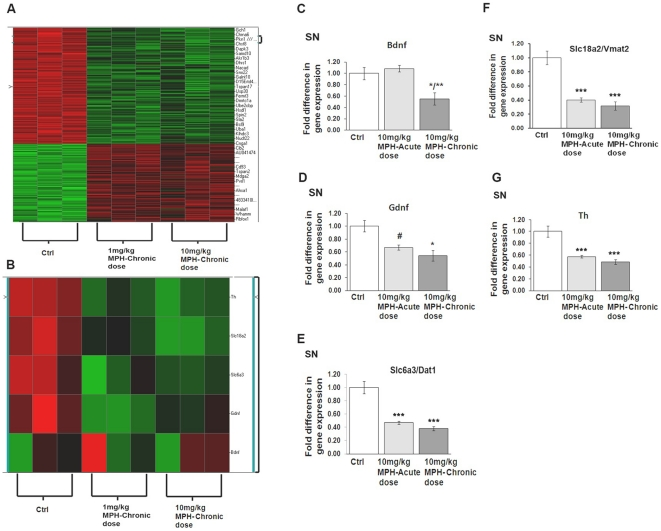 Acute and chronic administration of MPH alters gene expression in the substantia nigra (SN). (A) Heat map representation of gene expression changes following chronic administration of either 1 mg/kg MPH or 10 mg/kg MPH in the SN (n = 3). qPCR analysis demonstrating normalized fold-change expression of (B) bdnf , (C) gdnf , (D) dat1(slc6a3) , (E) vmat2(slc18a2) and (F) th mRNA in SN (n = 3). *p≤0.02 vs saline-controls (ctrl); **p≤0.02 vs saline-controls and 10 mg/kg MPH-acute dose; #p≤0.02 10 mg/kg MPH acute-dose vs saline-controls (ctrl). One-way ANOVA statistical test was performed to draw comparisons between the different groups followed by Bonferroni post-hoc tests.