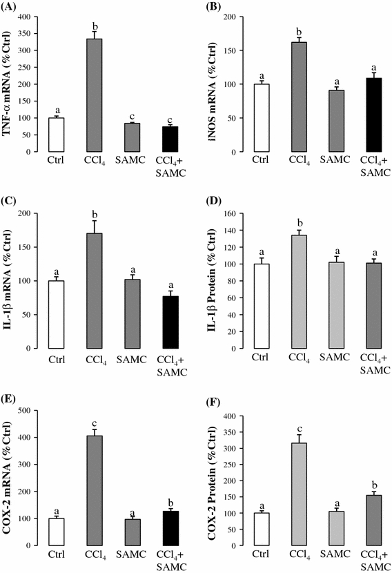 Anti-inflammatory properties of SAMC. Expression levels of a TNF-α mRNA, b iNOS mRNA, c IL-1β mRNA, d IL-1β protein, e COX-2 mRNA, and f COX-2 protein were measured in mice liver after CCl 4 with or without pre-treatment of SAMC. GAPDH was used as internal controls for target gene's mRNA expression. Data presented are expressed as Mean ± SEM ( n = 8–10) and experimental groups marked by different letters represented significant differences between groups at p