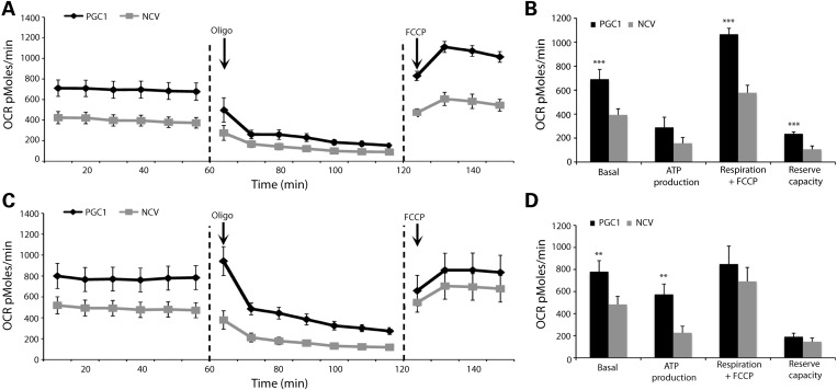 Cellular respiration in neurons over-expressing <t>PGC-1α.</t> ( A – D ) Primary neuronal cultures were infected with either the NCV or the PGC1 vector at day 7. Analysis of cellular respiration was performed at 5 (A) and 7 (C) days post-infection. OCRs were measured on 10 wells per group in basal conditions during 60 min. In each group, a subset of four wells was then treated with 5 µ m oligomycin (ATP synthase inhibitor) and OCR was measured during 60 min. Finally, another subset of five wells per group was exposed to 20 µ m FCCP (mitochondrial protonophore) and the OCR was measured during 30 min. (B and D) Based on these measurements, we assessed the following OCRs: basal ( n = 10), dedicated to ATP production ( n = 4), in presence of FCCP ( n = 5) and reserve capacity ( n = 5). Student's t -test: ** P