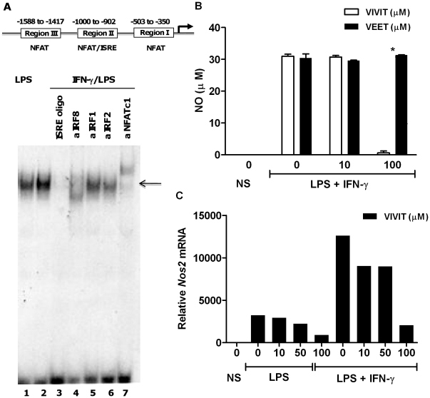 NFAT binds to Nos2 promoter and its selective inhibition abrogates nitric oxide secretion in macrophages. ( A ) Nuclear extracts were prepared from BMDMs stimulated with LPS (lane 1) or LPS and IFN-γ (lanes 2–7). Extracts were either incubated with a labeled probe NFAT/ISRE (element from region II of the promoter scheme), a competitor ISRE oligonucleotide, or with the indicated antibodies. DNA-protein complexes (indicated by arrow) were separated by electrophoresis. EMSA revealed binding of both IRF8 and NFATc1 to the same Nos2 promoter element. ( B ) BMDMs from WT mice were either untreated or pretreated with the indicated concentrations of 11R-VIVIT or the control peptide for 1 h followed by LPS (100 ng/ml) and IFN-γ (10 ng/ml) for 24 h. Nitric oxide secretion was assayed from supernatants by Greiss reaction. Experiments were performed in duplicate and repeated three times (mean ± SEM). ( C ) BMDMs were either untreated or pretreated with the indicated concentrations of 11R-VIVIT for 1 h followed by 1 h treatment with LPS alone or IFN-γ (10 ng/ml) prior to LPS (100 ng/ml) treatment for 4 h. Cells were harvested and total RNA was assayed for Nos2 mRNA levels by real-time RT PCR. Data is representative of three independent experiments. * p