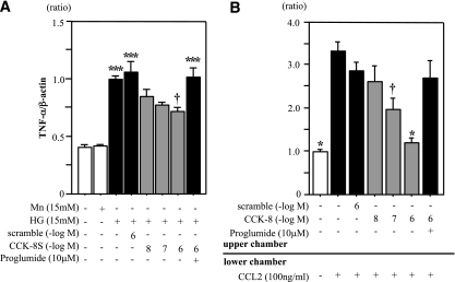 CCK-8S suppresses both expression of TNF-α and chemotaxis in <t>THP-1</t> cells. A : THP-1 cells were cultured under different conditions for 72 h. CCK-8S inhibited HG-induced TNF-α expression in THP-1 cells ( n = 5 each). Values are presented as the ratio of HG group. *** P