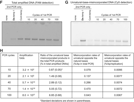 Amplification efficiency and fidelity assessments of the Ds–Px pairing by 40-cycle and 100-cycle PCR amplifications (repeated 10-cycle PCR). ( A ) Scheme of the 40- or 100-cycle PCR amplifications of the Ds -containing DNA templates using d Ds TP and modified-d Px TP, for the determination of the fold amplification, efficiency and selectivity of the Ds–Px pairing in PCR. ( B ) Scheme of the 40- or 100-cycle PCR amplification of the DNA template comprising only the natural bases using d Ds TP and modified-d Px TP, for the determination of the misincorporation rates of the unnatural base substrates opposite the natural bases. The results are summarized in Tables 1 and 2 . ( C ) Gel electrophoresis of the amplification products after each 10-cycle PCR (total 100 cycles of PCR) of Ds -temp 1 by the Deep Vent DNA pol (exo + ) using 1 µM each primer, 30 µM d Ds TP and NH 2 -hx-d Px TP and 300 µM natural dNTPs. A portion of each 10-PCR solution before (lanes T) and after each 10-cycle PCR (lanes +) was analyzed by 15% polyacrylamide denaturing gel electrophoresis, followed by SYBR Green II staining. M: marker (75-mer single-stranded DNA). ( D and E ) Sequencing analysis of the PCR products after 10, 40, 70 and 100 cycles of PCR by Deep Vent DNA pol (exo + ) (D) and AccuPrime Pfx DNA pol (E). Sequencing reactions were performed in the presence of d Pa′ TP (left panels) or dd Pa′ TP (right panels). The blue arrow indicates the original unnatural base position. The percentage indicated in the right panels is the retention rate of the Ds–Px pair in the amplified products. The method for the calculation of the retention rates is provided in the Supplementary Data section . ( F–H ) Determination of misincorporation rates of the unnatural base substrates opposite the natural bases in Cont-temp after 10, 20, 40, 70 and 100 cycles of PCR by the Deep Vent DNA pol (exo + ) using 30 µM d Ds TP and NH 2 -hx-d Px TP and 300 µM natural dNTPs (first PCR). The second PCR products with the FAM-labeled 3′-primer and Cy5-hx-dP x TP were analyzed by 15% denaturing PAGE, and the DNA fragments were detected with FAM fluorescence (F) for the quantification of the total PCR products and with Cy5 fluorescence (G) for the quantification of the unnatural base misincorporated products. (H) Misincorporation rates calculated from the data are summarized in the panel.
