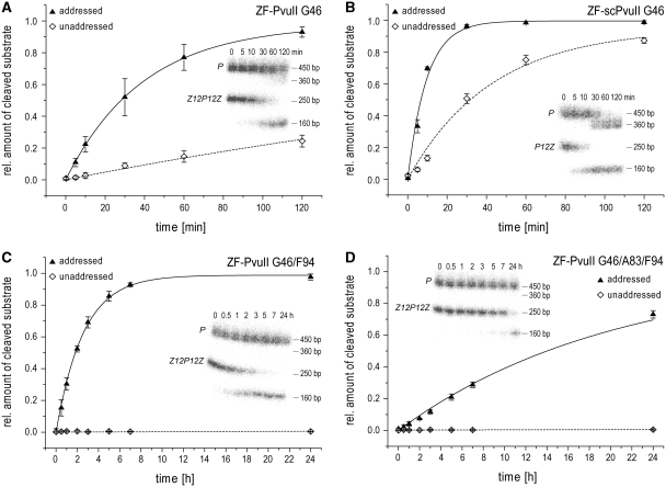 Kinetic analysis of the ZF-PvuII fusion enzymes cleaving an addressed substrate [black triangle; 250 bp PCR product containing either the tripartite (Z12P12Z) or bipartite (P12Z) target sites] and an unaddressed substrate [open diamond; 450 bp PCR product containing a single PvuII site (P)] in competition in a near equimolar stoichiometry (20 nM addressed substrate/20 nM unaddressed substrate/18 nM enzyme). The gel electrophoretic analysis of samples withdrawn from the incubation mixture at defined time intervals is shown as an insert of the activity versus time profile. ( A ) Preferential DNA cleavage (addressed versus unaddressed) by ZF-PvuII G46 (Z12P12Z versus P). ( B ) Preferential cleavage by ZF-scPvuII G46 (P12Z versus P). ( C ) Preferential DNA cleavage by ZF-PvuII G46/F94 (Z12P12Z versus P). ( D ) Preferential DNA cleavage by ZF-PvuII G46/A83/F94 (Z12P12Z versus P).