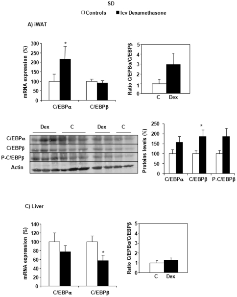 C/EBPα, C/EBPβ mRNA and protein expression in iWAT (A) and in the liver (C) of SD rats. Effects of central (icv) dexamethasone infusion for 2 days. A and C) Results are expressed as percent of relative mRNA expression compared to that obtained in control rats (100%). The analysis was performed in duplicate and the results were normalized with RPS29, β -actin and GAPDH expression. Mean ± SEM of n = 7–8 rats per group. B) Representative Western blots of C/EBPα, C/EBPβ and phosphorylated C/EBPβ-ser 105 (n = 5 per group). Quantification was performed using the ChemiDoc™ XRS and the Quantity One™ software. * P