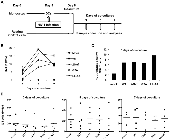 HIV-1-infected DCs cannot significantly increase resting CD4 + T cell proliferation in DC-T cell co-cultures. (A) Schematic representation of the experiment procedures. Primary MDDCs and autologous resting CD4 + T cells were used. (B) DCs infected with replication-competent WT or Nef-mutated HIV-1 were co-cultured with uninfected resting CD4 + T cells and HIV-1 p24 production in the supernatants was measured at the indicated times of co-cultures. Immature DCs were generated from purified monocytes by treatment with GM-CSF and IL-4 for 5 days. Resting CD4 + T cells were isolated from PBMCs using immunomagnetic particles and were cultured in the presence of IL-2 for 8 days. (C) Co-culture with HIV-1-infected DCs increases the surface expression of the transient T-cell activation marker CD69 on resting CD4 + T cells. CD69 expression was assessed at 3 days of co-cultures by flow cytometry. Mock-infected cells were used as background controls. These data are donor matched to Figure 6B . (D) CD4 + T cell proliferation in the co-cultures of HIV-1 infected DCs. DCs were mock infected or infected with WT or Nef-mutated HIV-1 for 3 days prior to co-culture with CFSE-labeled, uninfected resting CD4 + T cells. T cell proliferation was measured by flow cytometry at the indicated times of co-cultures. Data represent five independent experiments using cells from five different donors. Each symbol in the plots represents a single experiment result and the horizontal bars in the plots indicate the mean values of five independent experiments.