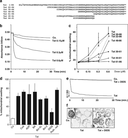 Tat-induced swelling in liver isolated mitochondria. ( a ) Sequence of full-length Tat[1-86] (HIV-1 Lai) and Tat derived peptides. ( b ) Dose/time response of Tat[1-86]-induced swelling. Isolated mouse liver mitochondria were exposed to full-length Tat at the indicated concentrations and mitochondrial swelling (measured as 90° light scattering at 545 nm) was monitored continuously. ( c ) Comparative analysis of the effect of Tat-derived peptides on mitochondrial swelling. Isolated mouse liver mitochondria were exposed to the indicated concentrations of Tat-derived peptides. Mitochondrial swelling was monitored for 30 min. Percentages of mitochondrial swelling were calculated as described under Materials and Methods. Data are means (±S.D.) of three independent experiments. ( d ) Evaluation of PTP-related inhibitors on mitochondrial swelling. Liver mitochondria were exposed to Tat[1-86] (0.3 μ M; 30 min) in the presence or absence (Co.) of the following compounds (added 5 min before Tat): cyclosporin A (CsA; 30 μ M), ADP (1 mM), bongkrekic acid (BA; 50 μ M), Bcl-2 (400 nM), Bcl-XL (400 nM), or DIDS (5 μ M). Histograms represent mean values (±S.D.) of five independent experiments. * P