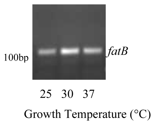 FatB was expressed in B. thuringiensis cells grown in iron restricted medium at 25 °C, 30 °C and 37 °C. <t>RNA</t> was isolated from stationary phase cells and reverse transcription <t>PCR</t> with 35 cycles was used to detect gene expression. Experiments were performed in triplicate and a representative gel is shown.