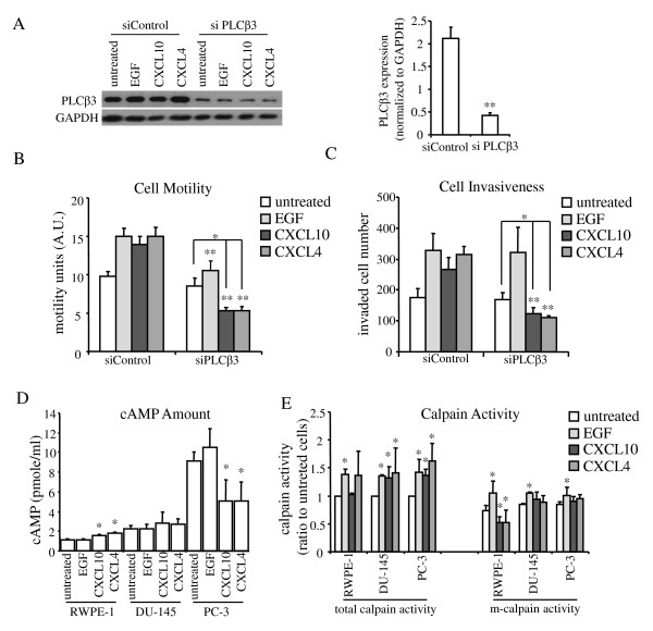 CXCR3 chemokine induced cell motility and invasion via PLCβ3 signaling pathway in prostate cancer cells and blocked cell motility by m-calpain activity inhibition in normal cells . (A) PLCβ3 was significantly knocked down in DU-145 cells by siRNA. Protein expression was quantified by ImageJ and normalized to GAPDH. Histogram represent mean values (+/-s.d.) of three separate experiments (**P