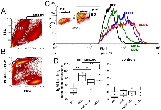 Mouse plasma IgM binding to apoptotic T lymphocytes after P. gingivalis immunization. C57BL/6 mice were immunized with heat-killed Pg and controls received sterile saline (n = 8 per group). Mouse plasma (1∶70) IgM binding to UV-irradiated Jurkat T cells was measured with flow cytometry. A, B) Apoptotic T cell population (R1) was verified with propidium iodide (PI) staining. C) Plasma IgM binding in gate R2 of preimmune (black) and postimmune (blue) plasma samples, and competition of IgM binding with 250 µg/ml MDA-LDL (green) or native LDL (red). Inset plots (in Fig. 6C ) represent the secondary antibody control (2°Ab control) and plasma IgM binding to apoptotic cells in a Pg-immunized mouse (post). D) IgM binding to Jurkat cells was determined for each mouse in Pg-immunized and control group as geometric mean value in R2 subtracted by the 2°Ab control. Box-plot graphs represent the distribution of sample means calculated for two repeated assays. **P
