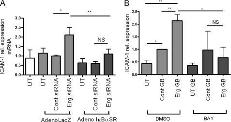 NF-κB induces ICAM-1 expression after Erg inhibition. A , Erg siRNA or control siRNA-treated HUVEC were transduced with AdIκBαSR or AdLacZ. ICAM-1 mRNA levels were measured by quantitative RT-PCR and results are expressed as fold-change compared with control siRNA AdLacZ-treated. n = 5. B , Erg or control Genebloc-transfected HUVEC were treated with BAY-11-7085 or dimethyl sulfoxide ( DMSO ) control. ICAM-1 protein levels were measured by Western blot using an anti-ICAM-1 antibody and normalized to levels of GAPDH ( n = 3). *, p