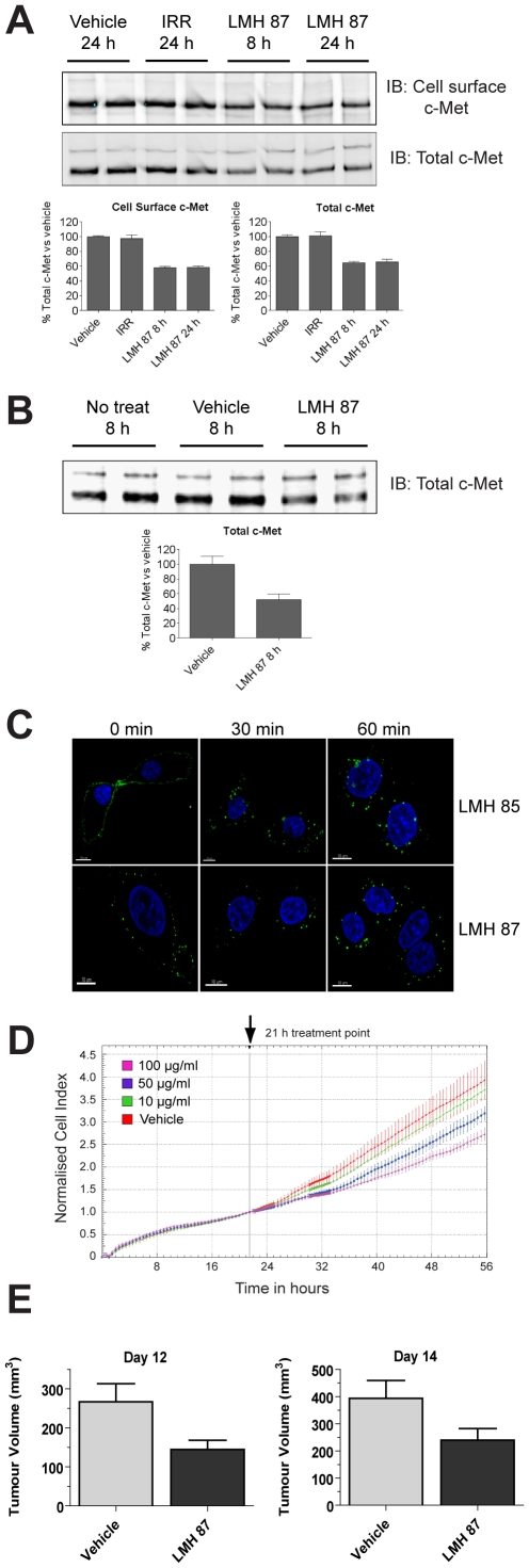 LMH 87 down-regulates surface c-MET and inhibits tumor cell growth. (A) c-MET was IPed using anti-c-MET antibody coupled to agarose beads from A549 lung cancer cells treated with LMH 87 and then cell surface biotinylated. Cell surface c-MET ( upper blot ) and total c-MET ( lower blot ) levels were determined by IB as detailed in the Materials Methods. Bar graphs show quantification by densitometry ± SEM. IRR = irrelevant antibody. (B) total c-MET remaining in U87MG glioma cells following incubation with LMH 87. Bar graph shows quantification by densitometry ± SEM. Both (A) and (B) are representative blots of repeated experiments. (C) LMH 85 and LMH 87 are internalized following engagement of the c-MET receptor. A549 cells were bound with LMH 85 ( top panels ) or LMH 87 ( bottom panels ) followed by AF488- labeled secondary antibody at 4°C. Internalization was induced with addition of media at 37°C. Significant internalization of both antibodies was observed at 30 min and 60 min as indicated by relocation of the fluorescent signal from the membrane to diffuse cytoplasmic and perinuclear locations. Scale bar = 10 µm. (D) xCELLigence analysis of A549 cells treated with LMH 87. A549 cells were treated with vehicle or different concentrations of LMH 87. Data is presented as the cell index normalized to 21 h ± SEM, the time point when antibody was added. Both the 50 and 100 µg/ml treatments caused a significant decrease ( p