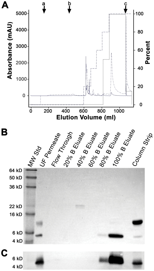 Reversed-phase chromatography (RPC) method development. Bench-scale RPC was performed using a 1.6×8.0 cm Source15RPC column that was sanitized with 1 N NaOH and equilibrated with ten CV of Buffer A (75.5 mM sodium phosphate/68.4 mM NaCl, pH 7.4) prior to sample load. The ultrafiltration (UF) permeate was brought to a final concentration of 1 M ammonium sulfate and then applied to the column followed by a five CV wash with Buffer A. Bound proteins were eluted using a five-step gradient consisting of 20%, 40%, 60%, 80%, and 100% Buffer B (64.2 mM sodium phosphate/58 mM NaCl/15% n-propanol (v/v)). Each gradient step was approximately five CV except the 100% B step which was ten CV. The column was then stripped using 65% n-propanol. (A) RPC of the UF permeate. Letters with arrows represent beginning of (a) sample load, (b) column wash, and (c) column strip. The presence of lunasin in each sample was determined by ELISA and SDS-PAGE. Lunasin was detected primarily within the 100% B elution fraction. Chromatogram shows the A 280 (solid line ______ ), the A 215 ( .__. __. ), percent Buffer B ( _ _ _ _ _ ), and the percent maximum lunasin content as determined by ELISA (-------). (B) Coomassie-stained SDS-PAGE gel of RPC fractions. SDS-PAGE using a 15% Tris-glycine gel was performed on 1∶10 dilution and 1∶4 dilutions of the UF permeate and column strip, respectively, and undiluted samples from the column flow through and Buffer B step gradient fractions. Molecular weight standards (MW Std) are shown in the first lane. The majority of lunasin ( > 95%) was detected in the 100% B eluate, with minor amounts detected in the 80% B eluate and in the column strip. The major contaminating ∼9 kDa protein was detected exclusively in the column strip. (C) Immunoblot analysis of the UF permeate, column flow through, step gradient fractions, and column strip. Proteins separated by SDS-PAGE were transferred to a PVDF membrane and probed with a lunasin-specific mouse monoclonal antibody. F