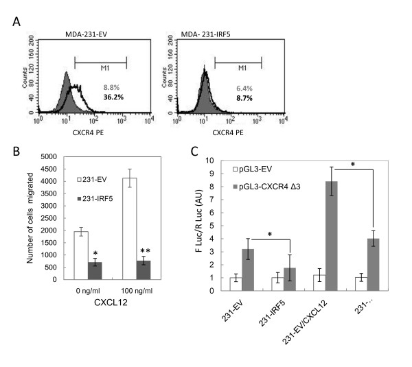 IRF5 reduces CXCR4 cell surface expression and SDF-1/CXCL12-dependent chemotaxis of MDA-MB-231 cells . A . CXCR4 expression (grey line) in unstimulated cells, shown superimposed on the isotype control (grey shaded area), and CXCR4 expression (black line) after stimulation, was measured by flow cytometry. MDA-MB-231 cells (pBabe and pBIRF5) were treated with the CXCR4 ligand SDF-1 for six hours and CXCR4 expression measured. IRF5 expressing cells show no significant expression of CXCR4. M1, Marker 1. Representative histogram plots from three independent experiments performed in duplicate are shown. B . Cells overexpressing IRF5 are incapable of SDF-1-induced migration when compared to empty vector (EV pBabe) control cells. Data are expressed as mean ± SD of three independent experiments performed in duplicate. Statistical significance was determined by comparing the difference in number of cells migrated between pBabe and pBIRF5 cells; * denotes P