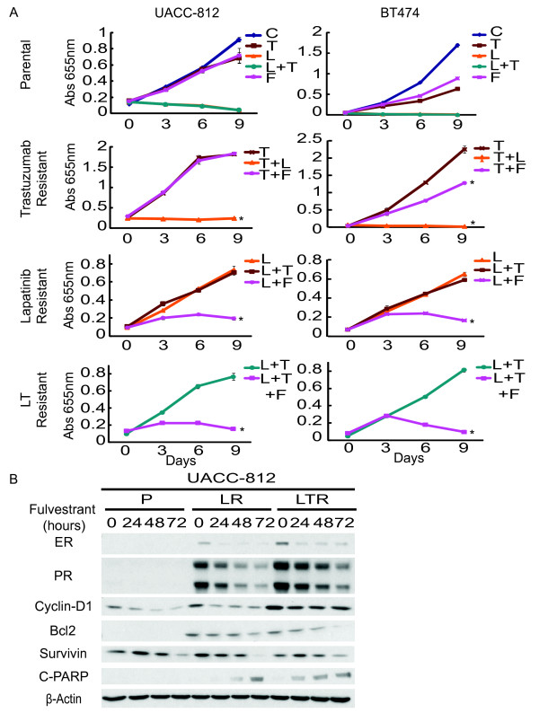 Trastuzumab resistant cells remain sensitive to lapatinib. Fulvestrant inhibits lapatinib and combination resistant cell growth . (A) Growth curves of UACC-812 and BT474 parental and resistant cells treated with different target therapies/regimens for nine days: trastuzumab (T) (10 μg/ml), lapatinib (L) (1 μM), trastuzumab plus lapatinib (L + T), or endocrine therapy, fulvestrant (F) (10 -7 M); media of parental cells (C). Cell numbers were quantified by absorbance at 655 nm after staining with methylene blue. Conditions were repeated in quadruplicate. Significance between groups was determined by multiple comparisons using the Sidak method (* P