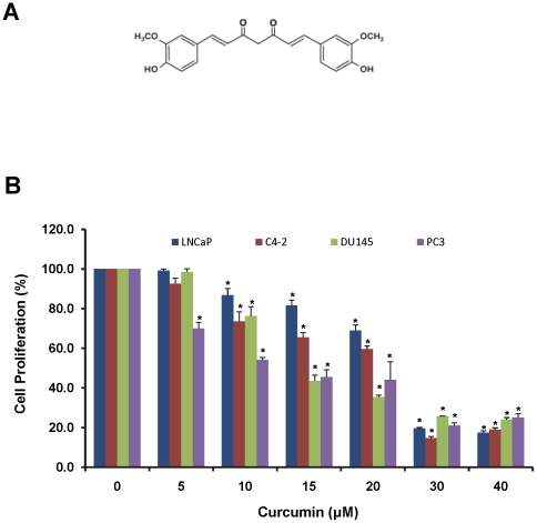 Curcumin inhibits prostate cancer cell proliferation. A). Chemical structure of curcumin. B). Effect of curcumin on proliferation of various prostate cancer cell lines. <t>LNCaP,</t> <t>C4-2,</t> DU145 and PC3 cell were treated with curcumin or vehicle control DMSO for 48 h and cell proliferation was determined using MTS assay. The percent cell proliferation was calculated by normalizing the proliferation of curcumin treated cells with proliferation of control treated cells. Concentration dependent inhibition in cell proliferation was observed with curcumin treatment. Mean ± SE; n = 3; *p