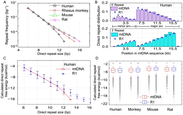 Analysis of direct repeat (DR) motifs in mitochondrial genomes. Abundance, distribution and free energy of DRs in <t>mtDNA</t> and random <t>DNA</t> sequences ( n = 100) with the same base composition (R1) as corresponding mtDNA. (A) Frequency of DR pairs (≥6 bp) in the mtDNA of human, rhesus monkey, mouse and rat. The DR frequency is normalized with respect to the mtDNA length in each species. (B) The distribution of left and right DR sequences in the minor and major arcs of human mtDNA and the mean distribution of DRs in R1 random sequences. (C) DR sizes and DR free energies in human mtDNA and the corresponding R1 random sequences. The lower the free energy of a DR, i.e. the more negative, the more stable is the DNA duplex formed. (D) Distribution of free energies of DNA duplex formed by DRs (≥6 bp) in native mtDNA and random sequences (R1) of human, rhesus monkey, mouse and rat.