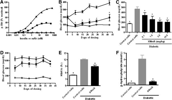 <t>XMetA</t> improves hyperglycemia and other metabolic markers of disease in diabetic mice. A : CHO-mINSR cells were incubated with increasing concentrations of XMetA (■), isotype control antibody (○), or insulin (▲), and <t>Akt</t> phosphorylation was measured by ELISA ( n = 3). B : Fasting blood glucose measurements were obtained weekly for 6 weeks from control mice treated with 10 mg/kg isotype control antibody (○) and diabetic mice treated with either 10 mg/kg XMetA (■) or isotype control antibody (●). C : After 3 weeks of treatment, fasting blood glucose was measured in control mice treated with 10 mg/kg isotype control antibody (white bar), diabetic mice treated with 10 mg/kg isotype control antibody (gray bar), and diabetic mice treated with the indicated doses of XMetA (black bars). D : Nonfasted blood glucose measurements were obtained weekly for 6 weeks from control mice treated with 10 mg/kg isotype control antibody (○) and diabetic mice treated with either 10 mg/kg XMetA (■) or isotype control antibody (●). After 6 weeks of treatment, blood hemoglobin A 1c ( E ) and nonfasted plasma β-hydroxybutyrate ( F ) were measured in control mice treated with 10 mg/kg isotype control antibody (white bar) and diabetic mice treated with either 10 mg/kg isotype control antibody (gray bar) or XMetA (black bar). Values shown are mean ± SEM. * P