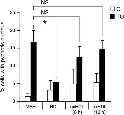 Oxidized HDLs (oxHDL) do not protect β-cells against TG-induced apoptosis. MIN6 cells were treated with 0.5 μmol/L TG in the presence or in the absence of 1 mmol/L nonoxidized or oxidized HDLs (oxidation performed during 8 or 16 h) for 24 h. Cells were then fixed, and apoptosis was assessed by scoring pycnotic nuclei. *Significant differences. VEH, vehicle; NS, no significant differences; C, control.