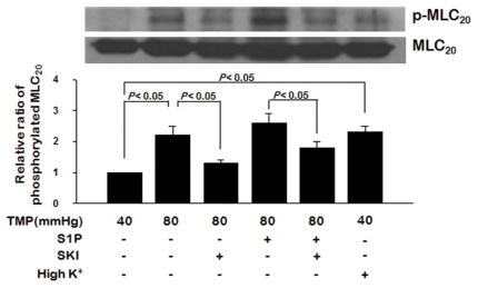 Changes in 20-KDa myosin light chain (MLC 20 ) phosphorylation with the elevation of transmural pressure, and the effects of <t>S1P</t> or <t>SKI</t> application. Results are representative of immunoblots from five independent preparations. Results are expressed as means ± SEMs (n = 5). TMP: transmural pressure.