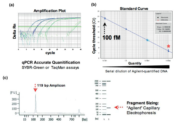 Quantitative PCR quantification of PCR products . Quantitative PCR (qPCR) assay designed to detect and quantify all amplifiable solexa molecules (using oligos p5/p7 and SybrGreen) or shRNA-specific PCR products (using Taqman, amplification primers p5/p7 and a dual-labeled probe). (a) shRNA PCR products quantified against a library of known concentration. (b) Standard curve constructed using a ten-fold dilution series covering 100, 10, 1 and 0.1 pM. (c) Agilent electrophoresis profile of reference library.