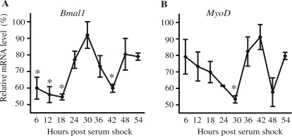 Serum shock is sufficient to synchronize circadian gene expression in C2C12 myotubes. Stable clones of C2C12 cells (CE-4.7 MyoD ) were differentiated for 5 days prior to serum shock. RNA was isolated at the indicated time post-serum shock and used to determine the expression level of Bmal1 and MyoD by RT-PCR. The target transcript levels were normalized to Rpl26 transcript levels and then normalized to the highest point across all time points. The data for the graphs represent the mean values ± SEM for three independent clones for the reporter gene. The expression of endogenous Bmal1 ( A ), endogenous MyoD ( B ) all displayed a circadian oscillation as indicated by significant differences in peak and trough expression. For each respective gene, one-way ANOVA followed by Tukey post-hoc test identified significant difference ( P