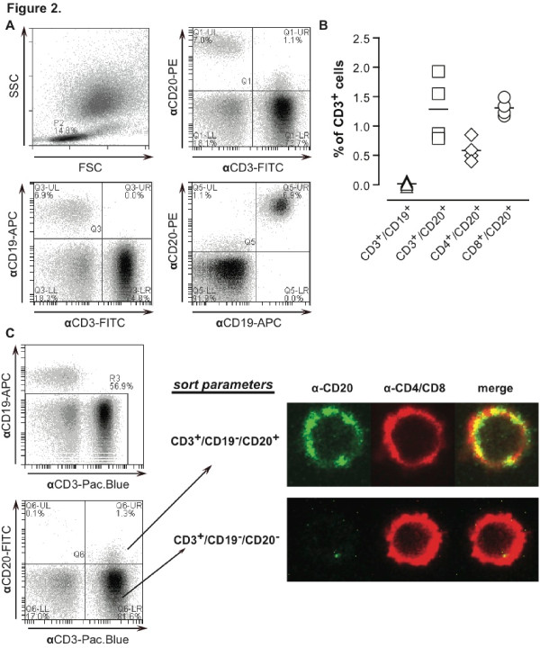 Detection of subsets of CD3 + CD20 + T cells in healthy subjects . (A) (i) Typical flow cytometry dot plots of the forward side scatter (FSC) against sideward scatter (SSC) of peripheral blood lymphocytes (PBLs). Within the lymphocyte population, CD3-FITC/CD19-APC/CD20-PE triple-staining was performed on the cells. This staining enabled visualization of (ii) double-positive CD3 + CD20 + , (iii) CD3 + CD19 - , and (iv) CD19 + CD20 + events. (B) PBLs expressing a CD3 + phenotype (α-CD3-FITC) were gated and evaluated for their expression patterns of CD19 (α-CD19-APC) and CD20 (α-CD20-PE). Alternatively, PBLs were stained with α-CD4-FITC or αCD8-FITC and α-CD19-APC/α-CD20-PE to determine the percentage of CD4 + /CD20 + /CD19 - and CD8 + /CD20 + /CD19 - cells. (C) Lymphocytes were stained with α-CD3-Pacific blue/α-CD19-APC/α-CD20-FITC, whereupon α-CD3 + /α-CD19-/α-CD20 + and α-CD3 + /α-CD19 - /α-CD20 - cells were sorted as illustrated with the sort plots. Subsequently, sorted populations were stained with a mix of α-CD4-PE/α-CD8-PE and the respective populations were analyzed by confocal microscopy for CD4/CD8 (red pseudo color) and CD20 (green pseudo color). Confocal microscopy was performed with a Leica DM IRE2 Inverted microscope (objectives: HCX PL APO 63 ×/1.3 with glycerin; camera: Stanford Photonics XR/Mega-10I (intensified) charge-coupled device (CCD) camera; software: Yokogawa Confocal Scanner Unit CSU10). This experiment was performed on four occasions with similar results. APC, allophycocyanin; FITC, fluorescein isothiocyanate; PE, phycoerythrin.