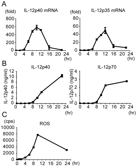 Kinetic analysis of ROS production, IL-12 mRNA expression and IL-12 production from macrophage after LAB stimulation. Peritoneal macrophages were cultured with 1 µg/ml KW3110 and IL-12p35 and IL-12p40 mRNA expression (A), IL-12p40 and IL-12p70 production (B) and ROS production (C) were measured over time. Values are mean of duplicate culture (C) or mean ± SD of triplicate culture (A, B). Data are representative of three independent experiments yielding similar results.